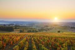 在博若莱红葡萄酒葡萄园的日出在秋天季节期间的 免版税库存照片