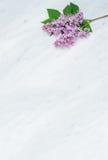 在卡拉拉大理石工作台面的淡紫色开花分支 库存图片