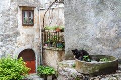 在卡斯塔夫老村庄, Istria街道上的猫  免版税库存照片
