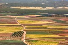 在卡斯提尔La Mancha的彩色场在西班牙 免版税图库摄影