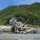 在卡皮蒂岛海滩新西兰的漂泊木雕塑 库存照片