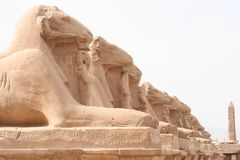 在卡纳克神庙tempel的狮身人面象在卢克索 免版税库存图片