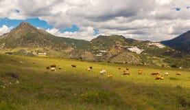 在卡萨雷斯,安大路西亚,西班牙附近的镇布兰科斯 库存图片