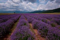 在卡赞勒克,保加利亚附近的淡紫色领域 免版税图库摄影