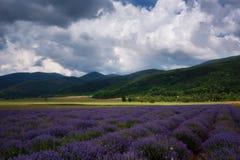 在卡赞勒克,保加利亚附近的淡紫色领域 免版税库存照片