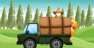 在卡车上的一只鸡 免版税库存照片