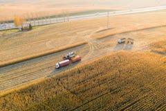 在卡车和拖车的玉米装货在日落 鸟瞰图 免版税库存图片