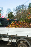 在卡车的下落的叶子 库存照片