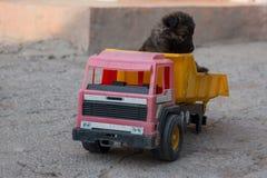 在卡车的小狗 库存照片