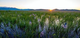 在卡马斯Lilly沼泽的日出在春天 图库摄影