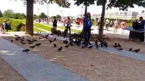 在卡鲁索广场内的一个鸽子人 图库摄影