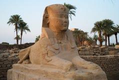 在卢克索神庙入口的狮身人面象  免版税库存照片