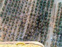 在卢克索从上面迅速增加飞行,对农场的一个看法 图库摄影