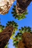 在印地安峡谷的棕榈树 免版税库存照片