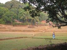 在印地安米种植园照片的天旱 库存图片