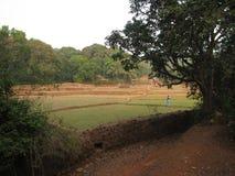 在印地安米种植园照片的天旱 免版税图库摄影