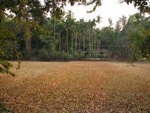 在印地安米种植园照片的天旱 图库摄影