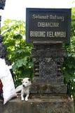 在印度尼西亚文字旁边的流浪狗 库存图片