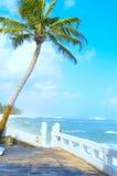 在印度洋的岸的椰子树 免版税库存图片
