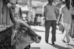 在印度, Jaisalmer威胁变冷和思考 库存照片