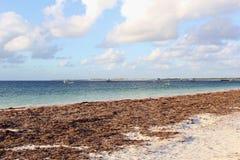 在印度洋的看法在西万提斯, Nambung国家公园,西澳州 免版税库存图片