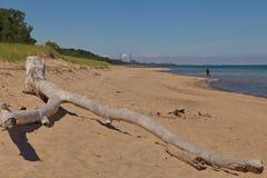在印第安纳沙丘国家公园海滩的漂流木头 库存图片