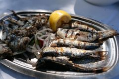 在卵形金属盘说谎油煎的鱼 库存照片