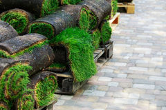 在卷的绿色草坪草 免版税库存照片