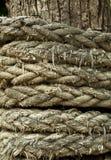 在卷起的绳索结构树附近 免版税图库摄影
