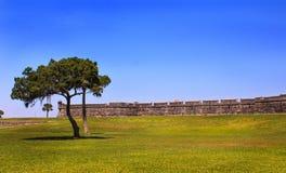 在历史的城堡的树 库存照片