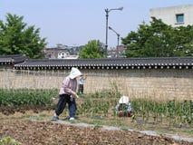 在历史的墙壁里面的韩国人Garderns工作小庭院 免版税库存照片