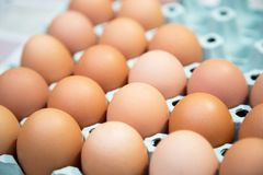 在压出物的鸡蛋从自然饲养 库存图片