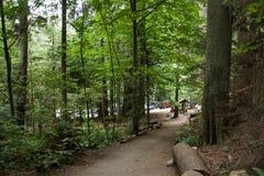 在厚实的绿色雨林的道路,西温哥华, 库存照片