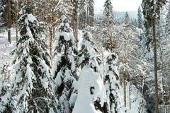 在厚实的雪毯子下的树 库存图片