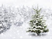 在厚实的雪的杉树 免版税库存照片
