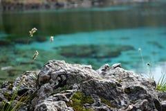 在原始水背景的岩石细节 免版税图库摄影
