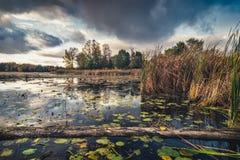 在原始Clayton湖的被反射的天空 免版税图库摄影