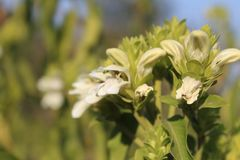 在原野找到的白色野花 库存照片