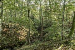 在原野谷的树在eifel的早晨 库存照片