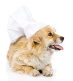 在厨师的帽子的狗朝右边看 隔绝在白色backgr 库存照片