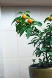 在厨房墙壁的圣诞节樱桃 免版税库存照片