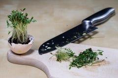 在厨房用桌上的水芹新芽 在一个木板切的草本 免版税库存照片