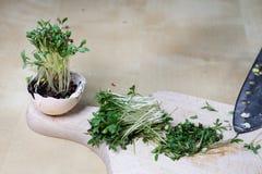 在厨房用桌上的水芹新芽 在一个木板切的草本 库存照片