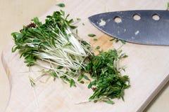 在厨房用桌上的水芹新芽 在一个木板切的草本 免版税库存图片