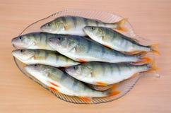 在厨房盛肉盘的新鲜的栖息处鱼 免版税库存照片