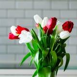 在厨房背景的新鲜的白色和红色郁金香 从丈夫,人的礼物 Copyspace 免版税库存照片