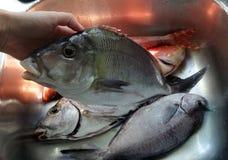 在厨房水槽的海洋鱼 免版税库存图片