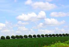 在县端的结构树队列 免版税库存照片