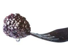 在叉子的网黑莓 免版税库存照片