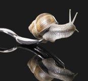 在叉子的葡萄树蜗牛 库存照片